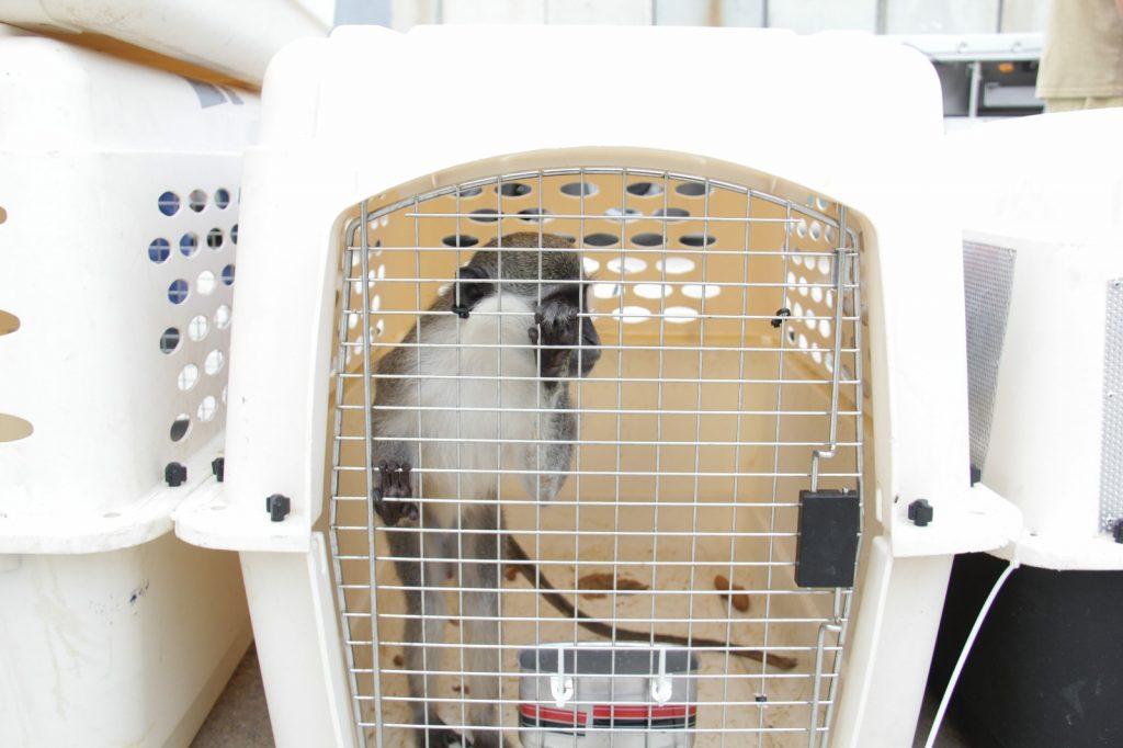 15 חיות הועברו מגן החיות בעזה לשלל גני חיות בארץ ובעולם