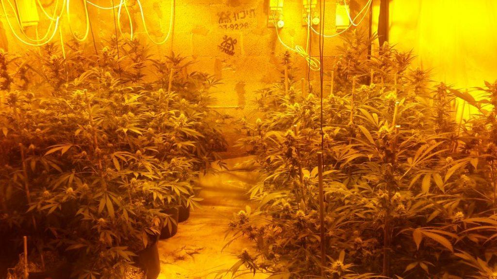 חממת סמים ענקית לגידול מריחואנה נתפסה במערב בנימין