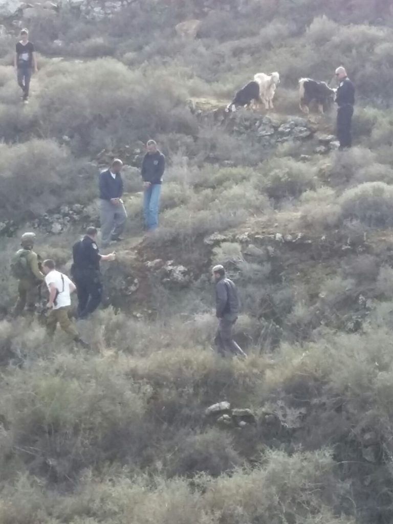 """גנבי עדרים בשומרון נתפסו על חם ע""""י בני משפחת הרצליך, בעלי העדר"""