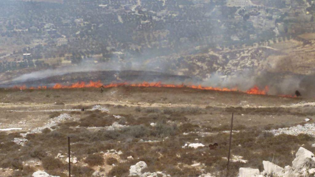 יצהר: עשרות עצים של חקלאי מיצהר נשרפו בעקבות הצתה ערבית