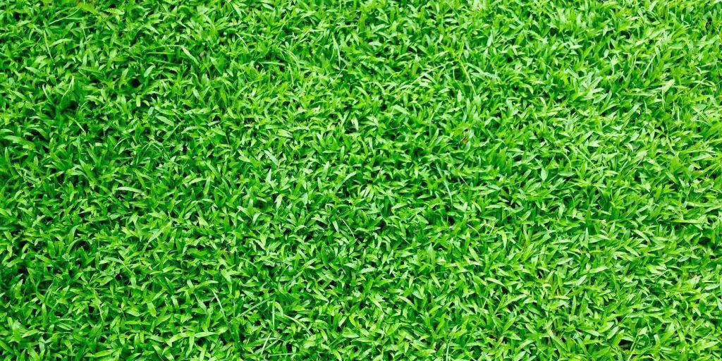 התקנת דשא סינטטי בשומרון – כיצד נבחר נכון?