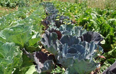 החורף והגשם עדיין כאן,זמן מצוין לשתול גינה חורפית או גינת ירק