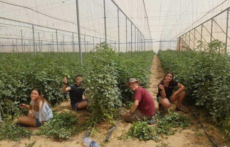 חופש גדול? זמן להתנדב: במקום להשתעמם יוצאים לסייע לחקלאים