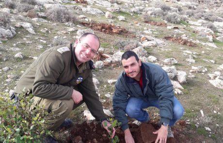 """לקראת ט""""ו בשבט: המנהל האזרחי החל בנטיעת עצים ביער כרמל בדרום הר חברון"""