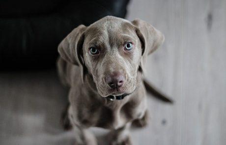 זיקוקים ביום העצמאות: סיוט לכלבים וסכנה ממשית לבריאותם